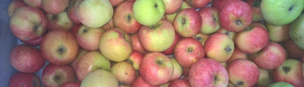 Äpfel - Foto: C. Günzel